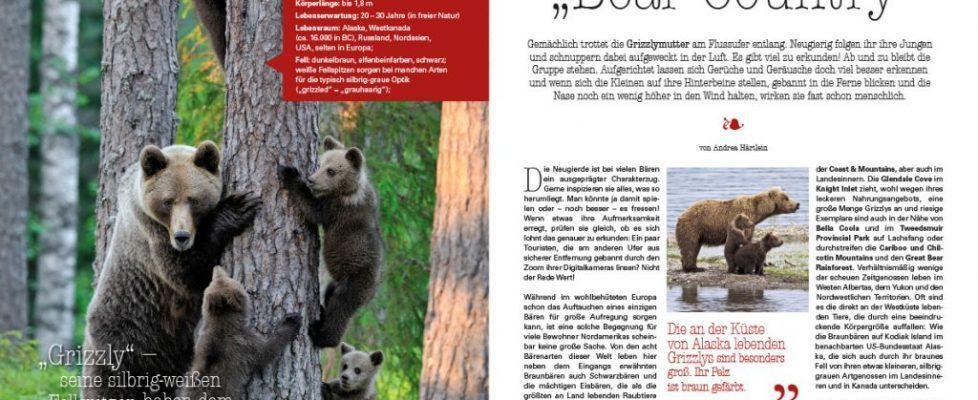 Bären in Kanada Reportage - Andrea Härtlein